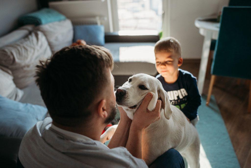 rodzinny pies labrador